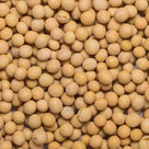 Sojabonen-5-kilo-(biologisch)