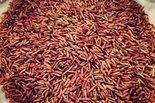 Rode-Rijst-25-kilo-Grootverpakking-(biologisch)